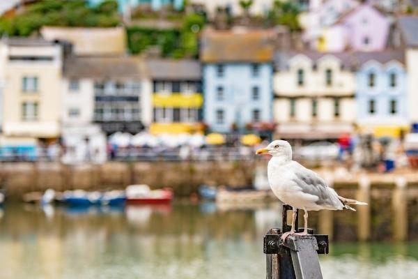 Seagull in Brixham harbour