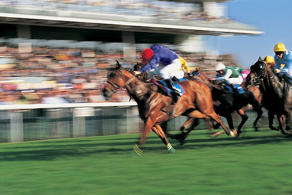 Horse racing at Newton Abbot