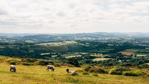 View from Dartmoor across to Tavistock