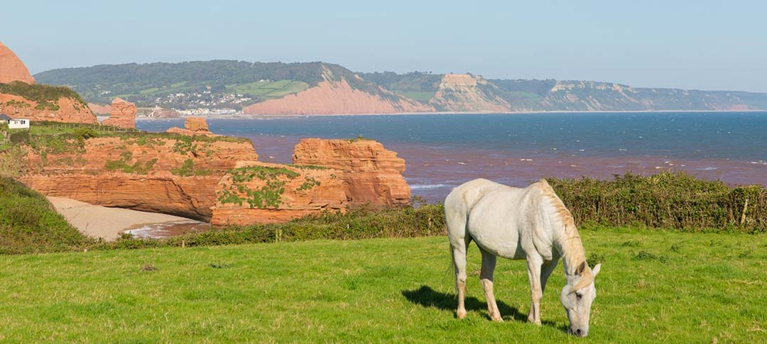 View of Sidmouth with horse in foreground